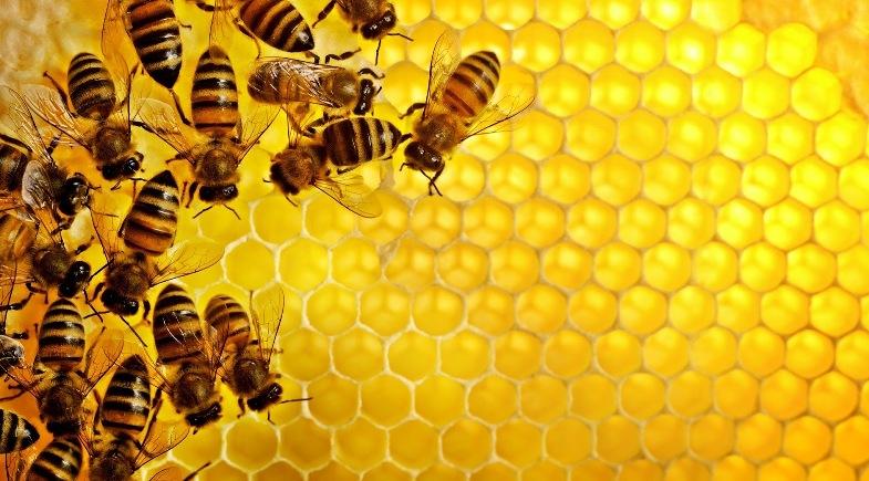 Serba-Serbi Lebah